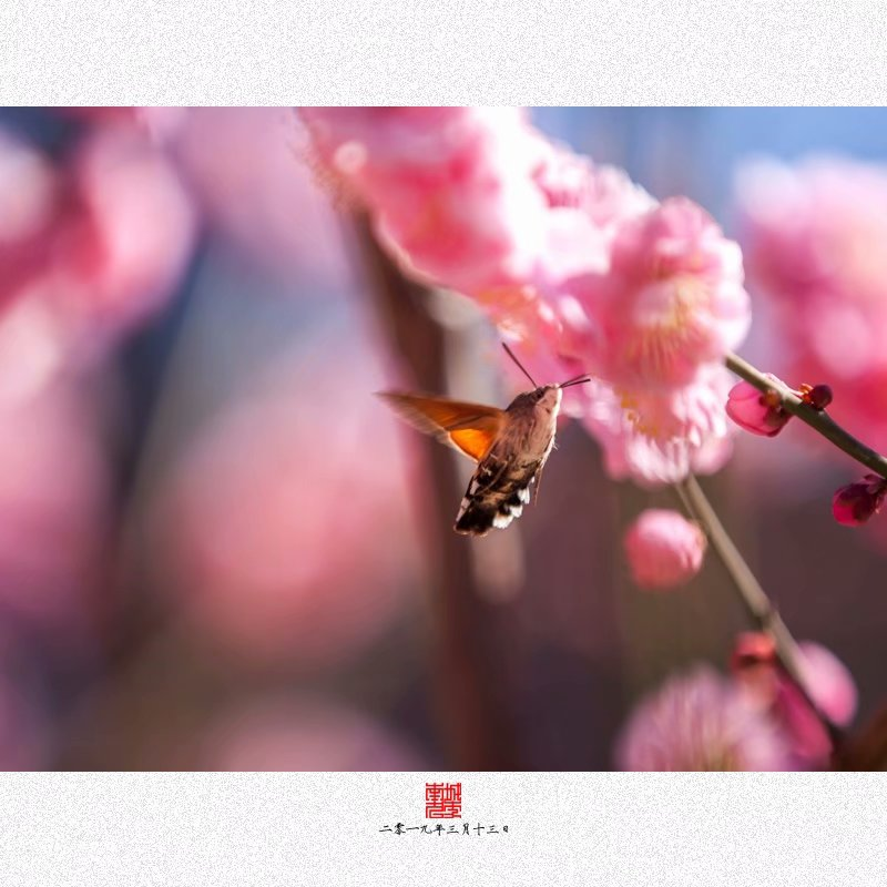 明城墙遗址公园每年都会有腊梅和桃花节,一到每年三月份儿,这里也是北京摄影爱好者聚集的地方。差不多这几年吧,我每年都去一次,拍点儿花卉什么的。可以说北京初春和深秋是各种摄影人和被拍人最活跃的时候,看看热闹,就图一乐儿。